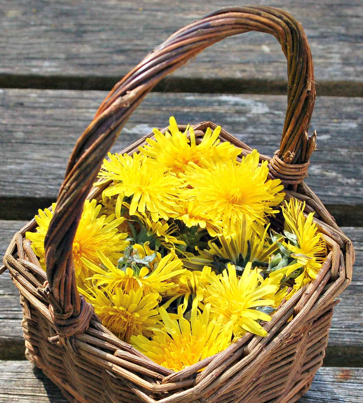 Wonderful recipe using Dandelion Flower petals - great fun for kids to make teaches them about the idea of edible weeds starting with a plant that we can all identify