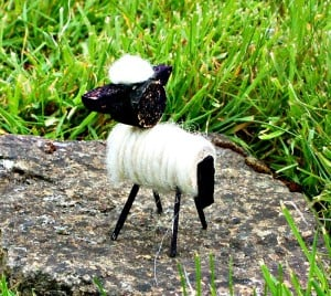 back of cork sheep