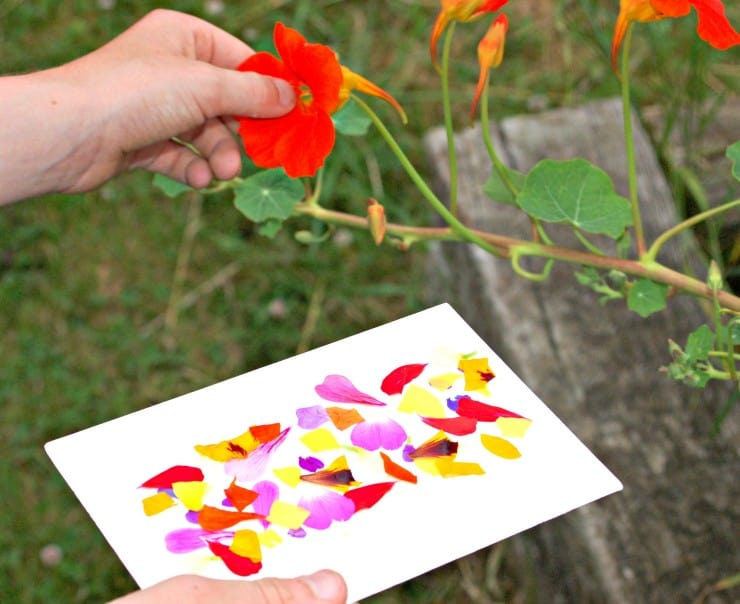Sticky Nature Cards are the simplest and best kids craft ever. They're the perfect, portable nature craft that take less than a minute to set up.