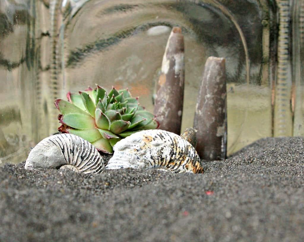 Terrarium - Ammonites and succulent