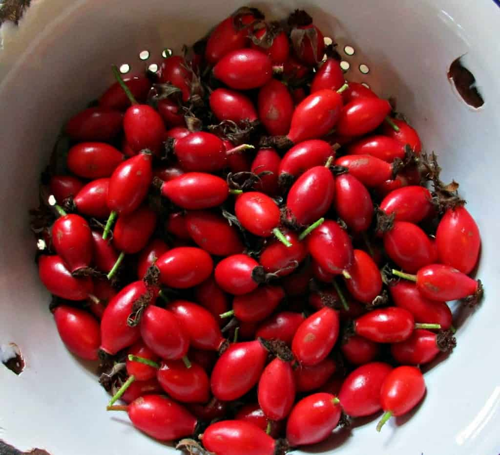 Just Picked Rosehips