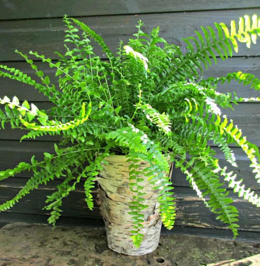 bark covered plant pot