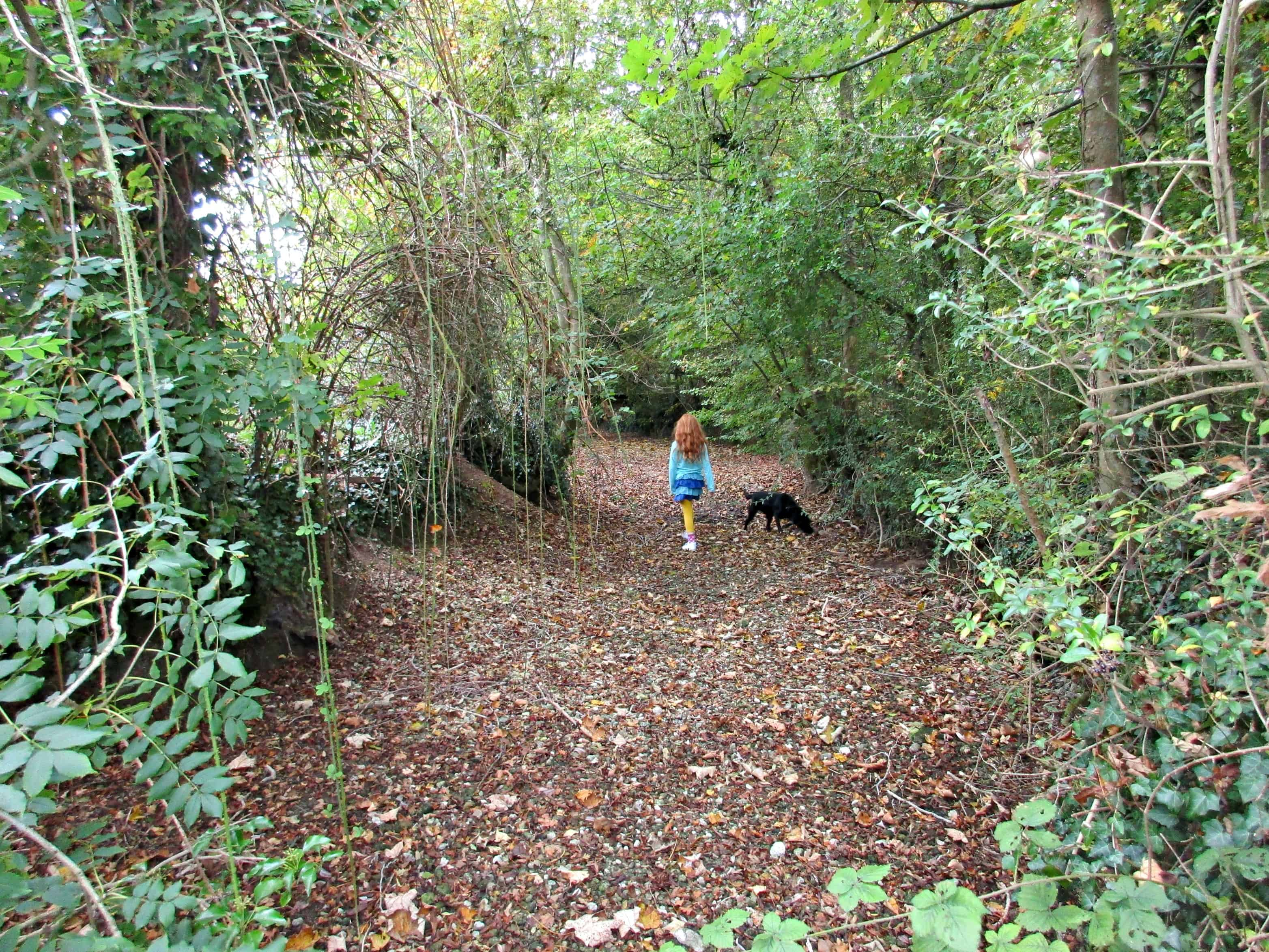 We have set ourselves the challenge of learning to identify all the wild plants along our favourite walk this year