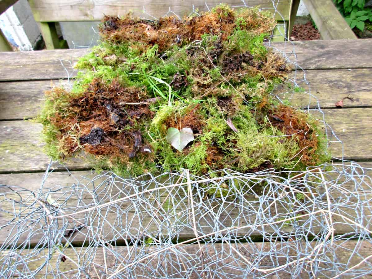 Check out our easy step by step instructions to make a wonderful Chicken wire, Moss and Succulent Toadstool - a beautiful living garden sculpture.