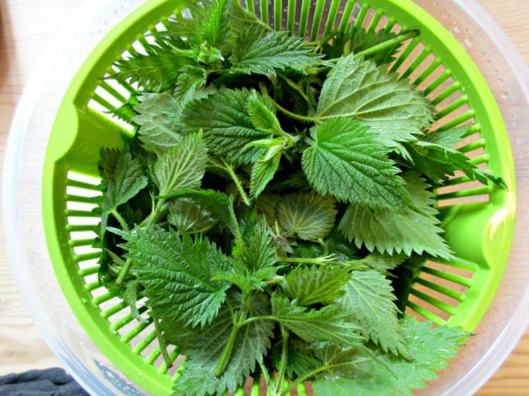Nettle Cordial - dry leaves