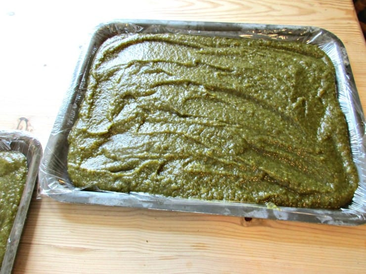 Nettle. Apple and Pear Fruit Leather - spread out on pans for drying