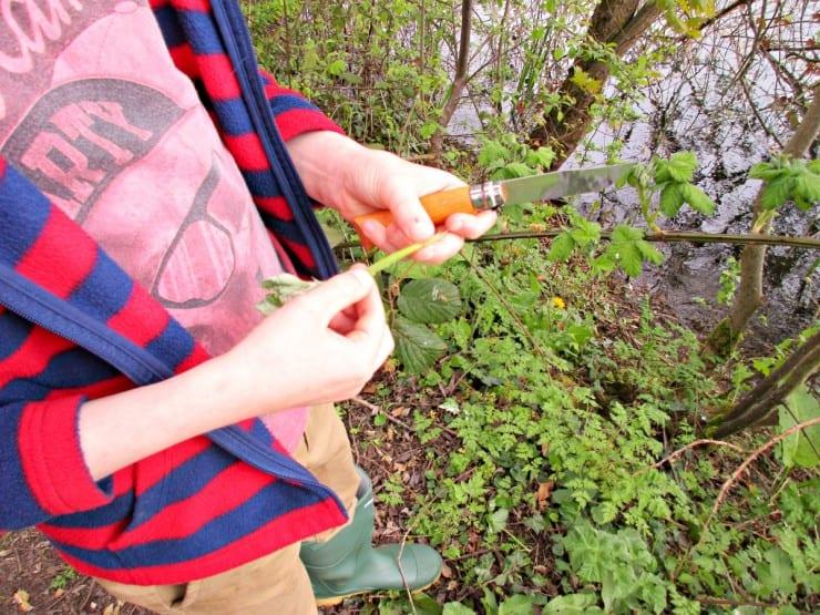 peeling bramble stems