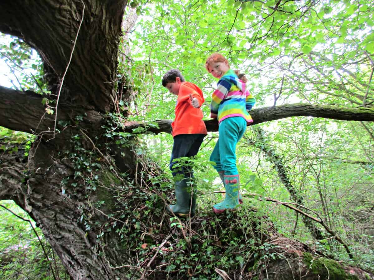 What kids are really doing when they climb trees. The next time you watch a kid climb a tree, sit back and enjoy it - you are watching the fudaments of management theory at work!