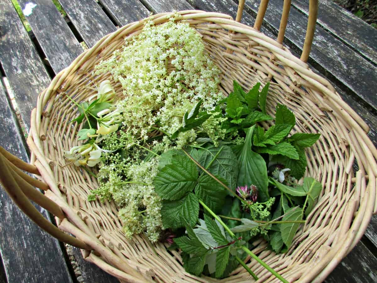 There are lots of reasons to dry your own herbs - It's fun, it's a way of preserving a glut or something that has a short season, and you know where it comes from and how it's been treated. It also is a great way to take advantages of the hundreds of useful plants that grow wild, that have a multitude of uses once you start to look into them.