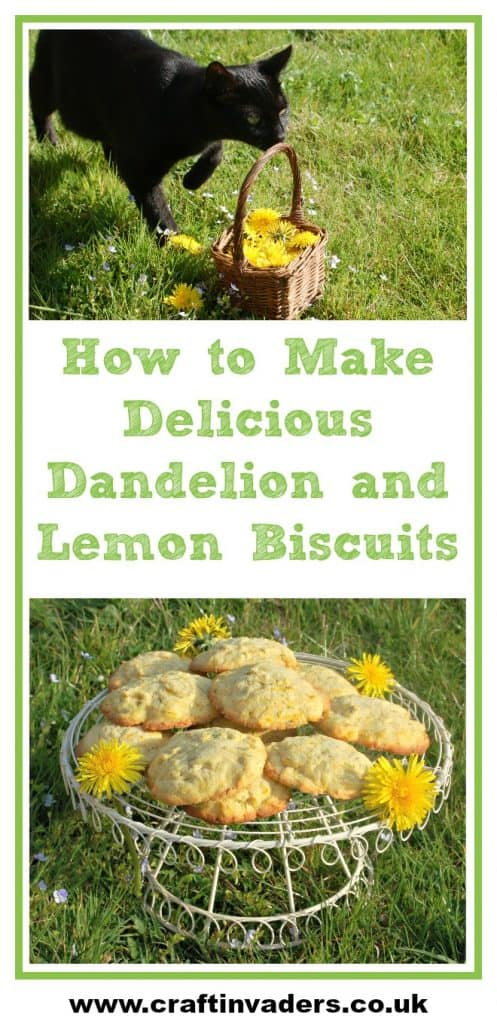 Dandelions are one of the easiest wild flowers to identify, so get out and forage some today and try our wonderful Dandelion and Lemon Biscuits recipe #Dandelions #ForagingRecipes #WildFood #Cookies #LemonCookies #Biscuits #CookingWithKids