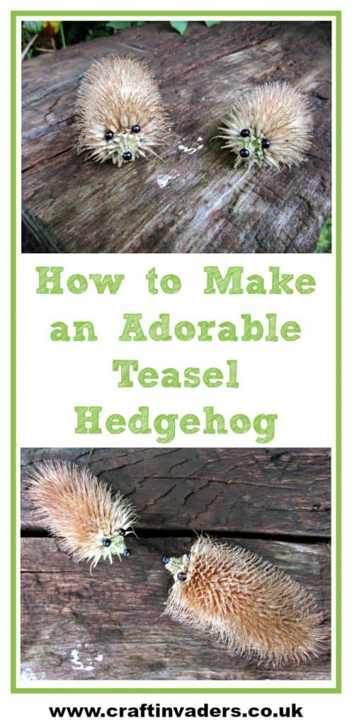 Learn how to make an adorable teasel Hedgehog out of a teasel seed head in our super easy tutorial. Fun craft for both adults and kids