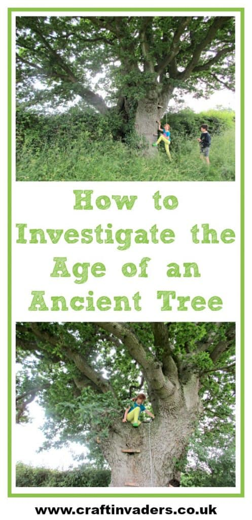 The kids loved investigating this ancient Oak Tree and trying to estimate it's age by measuring its girth for #30DaysWild