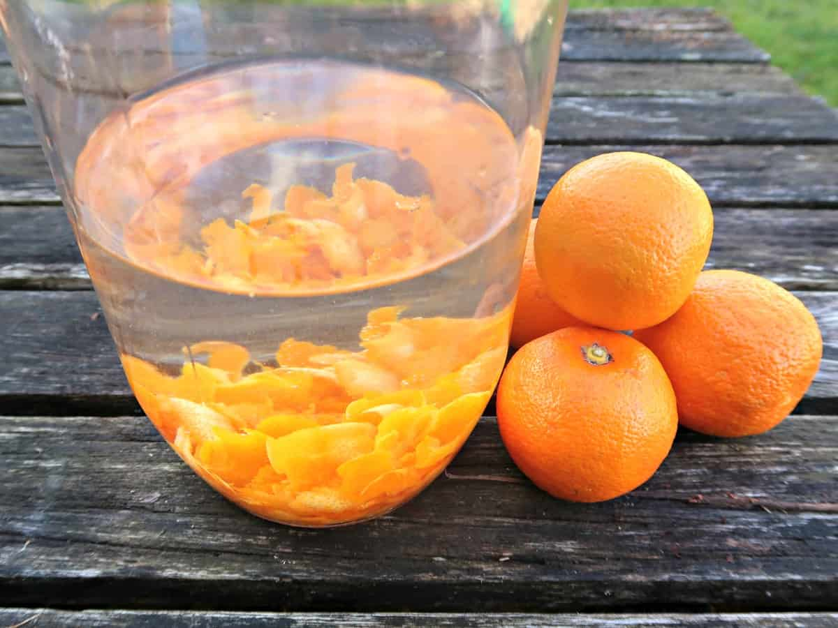 Seville oranges and gin are a match made in heaven. Thanks to the high concentration of aromatic essential oils contained within the zest of this bitter orange, this mouthwatering Seville orange gin infusion is ready in a matter of days. It really couldn't be simpler to make, and it tastes fantastic. #OrangeGin #SevilleOrangeRecipes #SevilleOrangeGin #MarmaladeGin #GinInfusions #GinRecipes