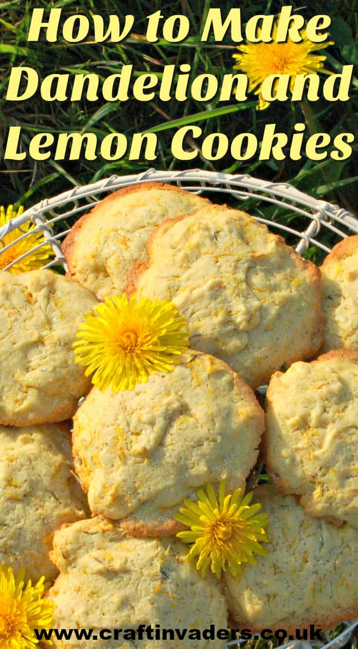 Dandelions are one of the easiest wild flowers to identify, so get out and forage some today and try our wonderful Dandelion and Lemon Biscuits recipe. #dandelionflowers, #dandelionCookies, #WildFood, #Foraging, #Herbs