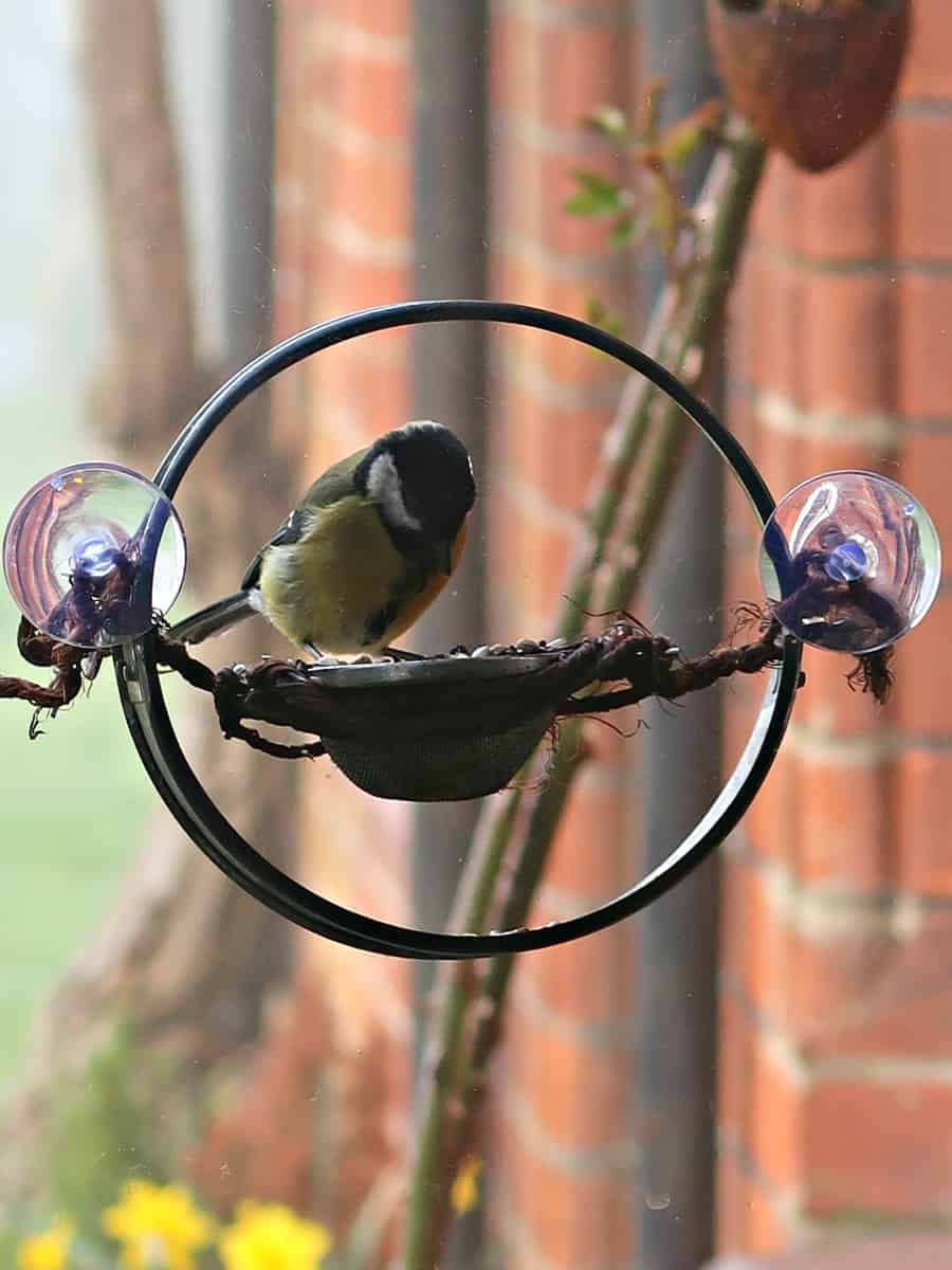 Our DIY window bird feeder is made from an old cake pan and a tea strainer and allows us to watch our lovely wild birds eat their breakfast while we eat ours. It is a fantastic way to see birds close up while still keeping them safe from predators. #birdfeeder #windowbirdfeeder #homemadebirdfeeder