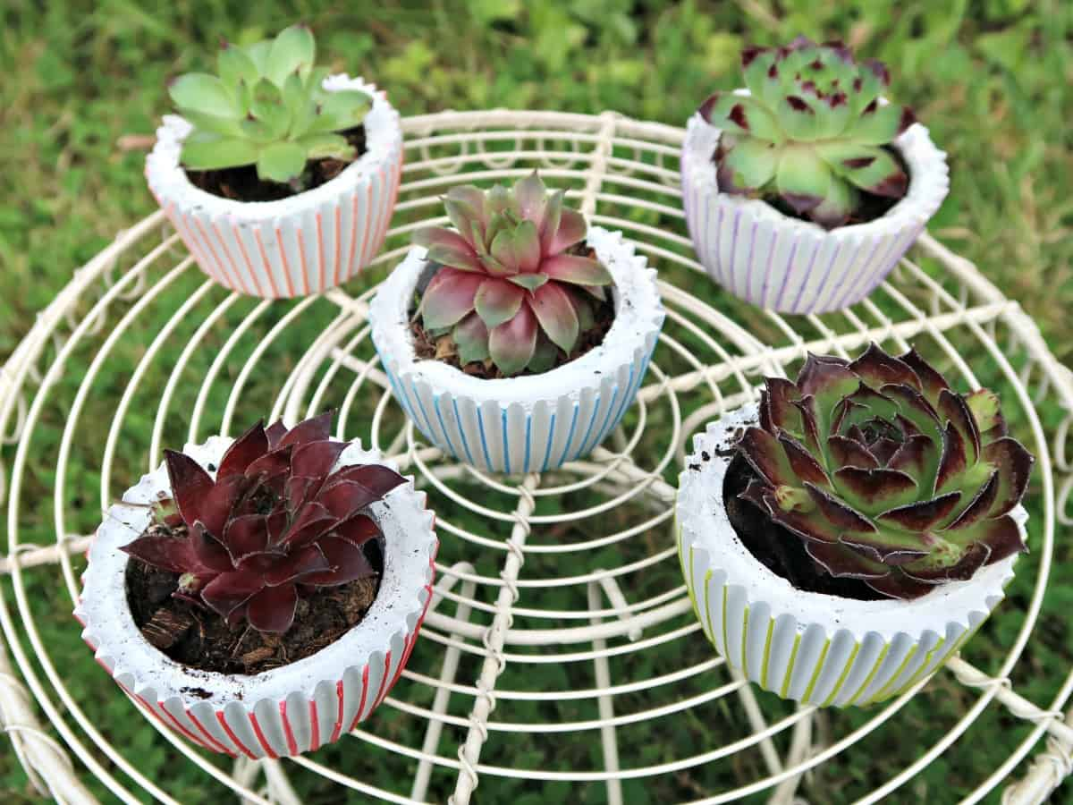 DIY concrete planters is they can be made in all sorts of shapes and sizes. & DIY Concrete Planters: Cute Pots Shaped Like Cupcakes \u2022 Craft Invaders