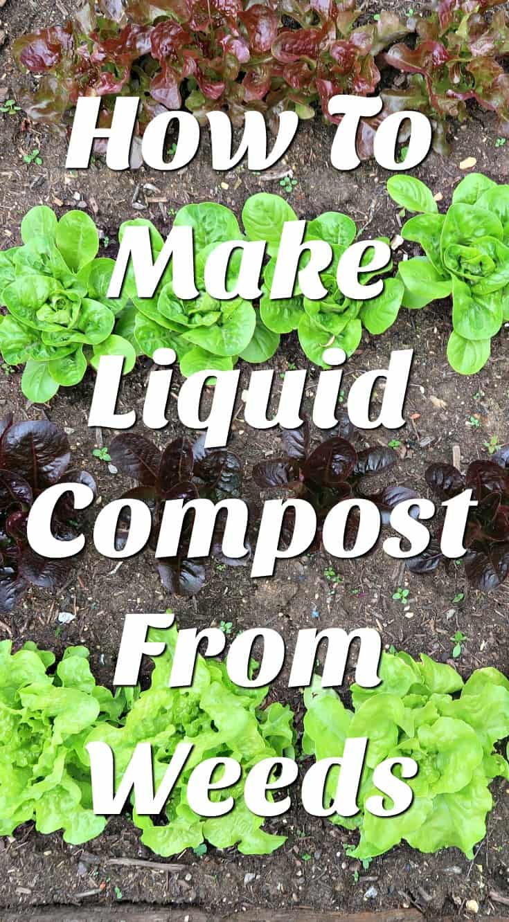 Making liquid compost from weeds is easy, free and good for the environment as well as being amazing for feeding vegetable plants #vegetablegardening #organicgardening #homestead #kitchengarden #gardening #growyourown