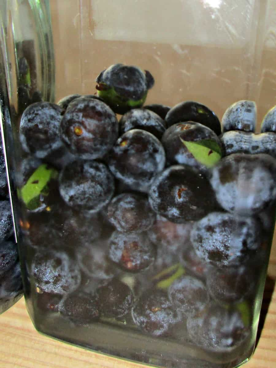 Every year we forage for sloes berries to make sloe gin. Learn how to identify sloes, when to pick them and try the best sloe gin recipe ever.