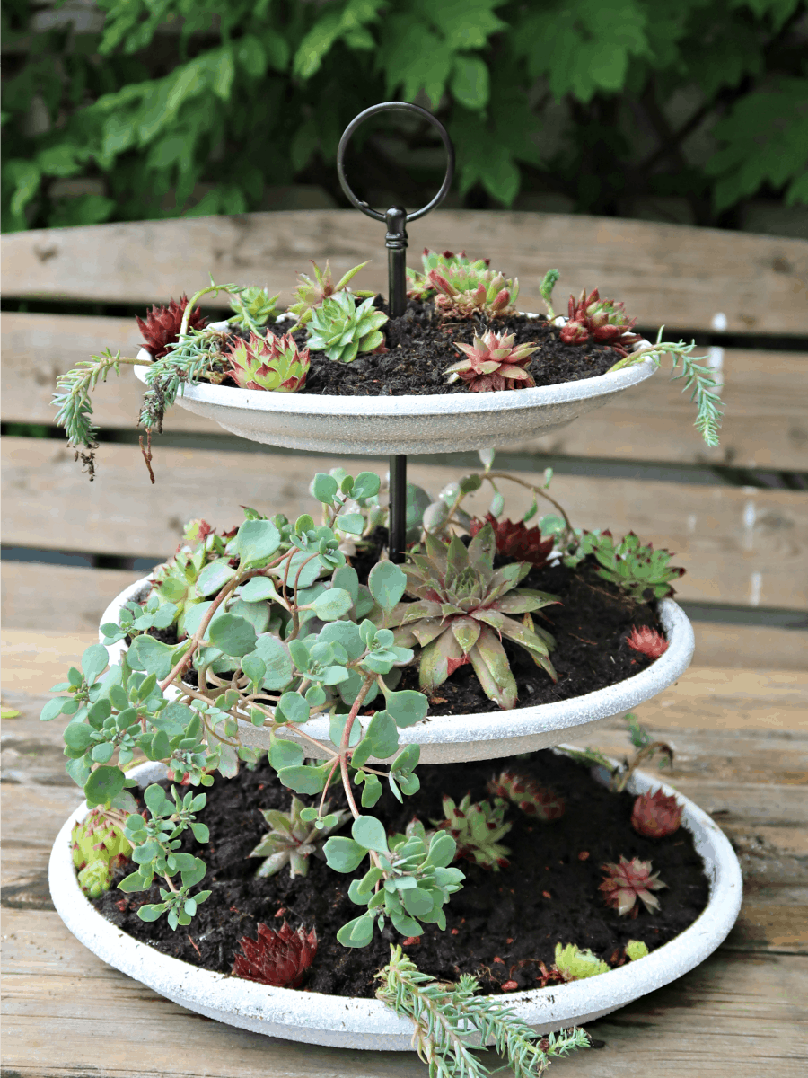 This tiered succulent planter is simple to make using a cake stand rod set, and plastic pot saucers sprayed to look like stone. #succulentplanter #tieredplanter #succulentcenterpiece #plastikoteuk #spraypaintideas