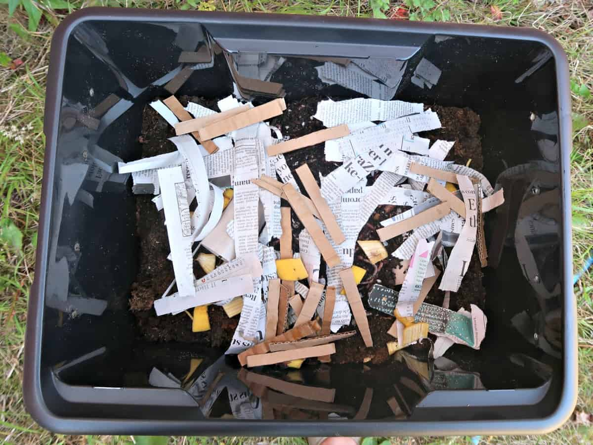 We explain what a wormery is, the benefits of owning one, and how to easily DIY a worm compost bin for just a few pounds.
