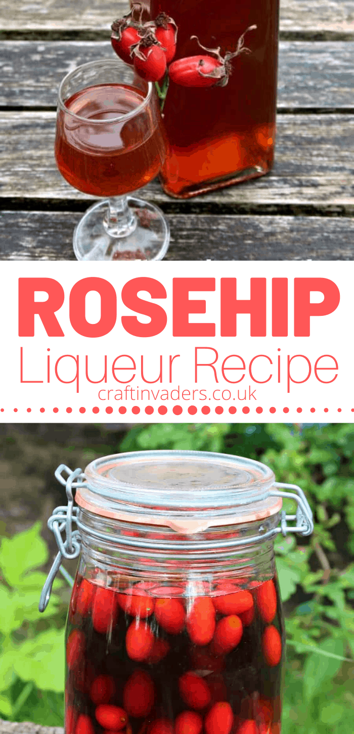 I cant promise that our Homemade Rosehip liqueur will stop you catching a cold, but it'll certainly cheer you up if you do have one. #Rosehips #RosehipLiqueur #RosehipGin #RosehipBrandy #RosehipBerries #RosehipPlant #Foraging #WildFood